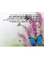 Butterfly beauty Canvas Print 16x12