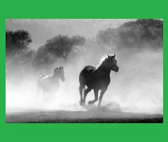 green horses Canvas Print 24x20