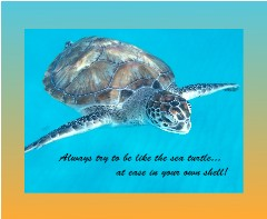 Sea Turtle Canvas Print 14x11