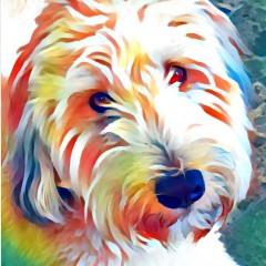 Winston Canvas Print 24x24