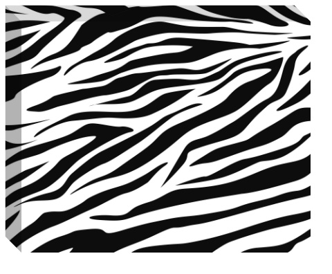 Zebra Stripes Canvas Print 20x16