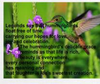 Hummingbird Canvas Print 24x20