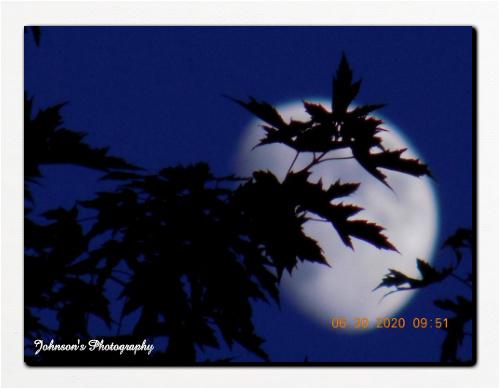 Bright Moon 16 x 12 Custom Canvas Print XPress