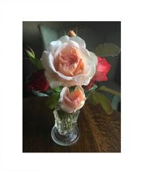 granada roses 8 x 10 Custom Canvas Print XPress